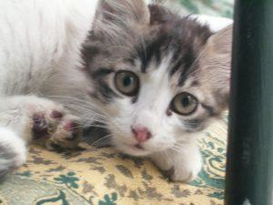 ネコ その2